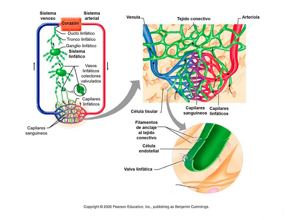 Linfología - Tratamientos para linfedemas - Kinesiotapes - Presoterapia